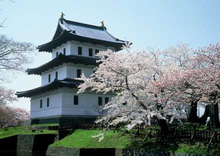 道南【松前公園】の桜