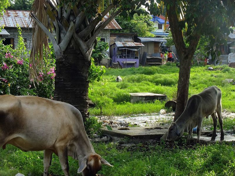 マクタン島の標準的な村(ブアヤ)