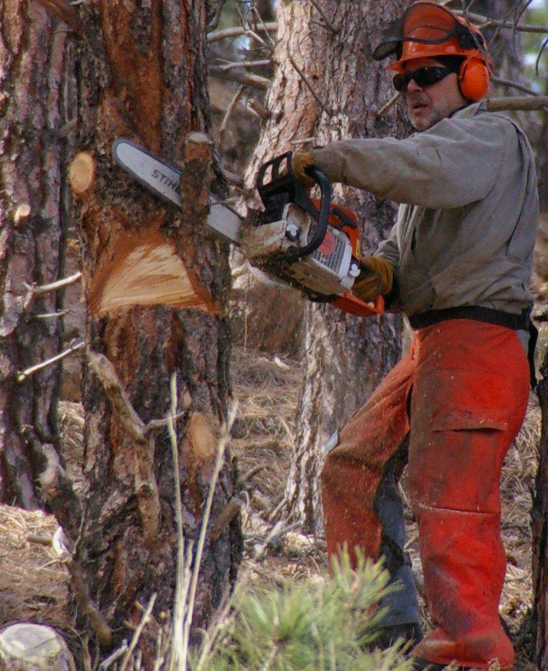 チェンソーで木を切る作業者