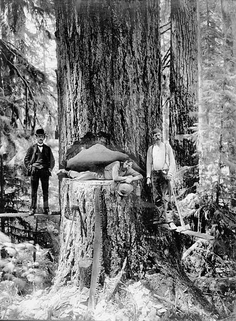 伐採風景(20世紀初頭のアメリカ)